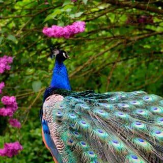 Brandywine Zoo Near The Concord